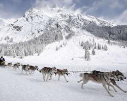 Собачья упряжка бежит на фоне горы