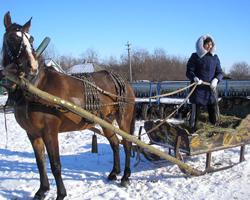Человек стоит в санях, в которые запряжена лошадь