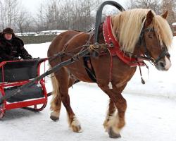 Как запрячь лошадь в сани